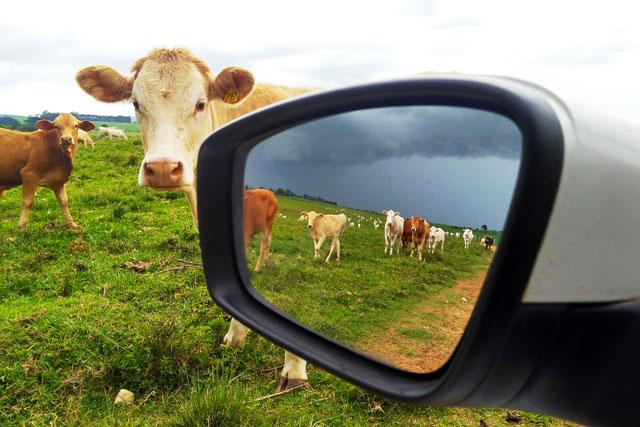 Concurso Fotográfico Calendário Sindicato Rural de Ponta Grossa 2020