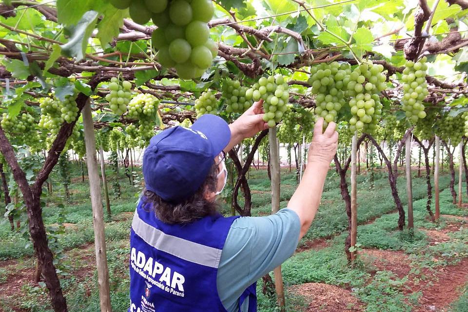 A fiscalização garante acesso a insumos de qualidade aos produtores rurais e alimentação saudável para a população.
