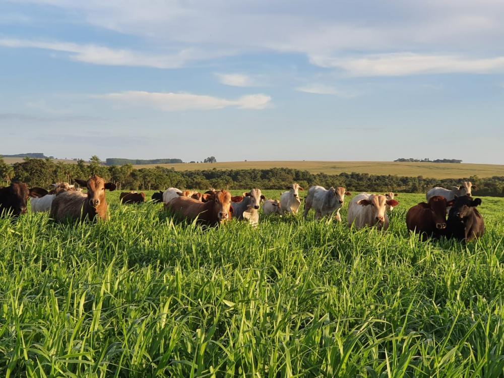 Fazenda diminui 75% da área de pecuária e aumenta 30% da produção