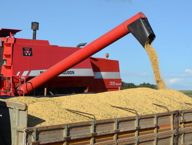 Exportações de soja neste ano geraram divisas de US$ 398,7 milhões para SC