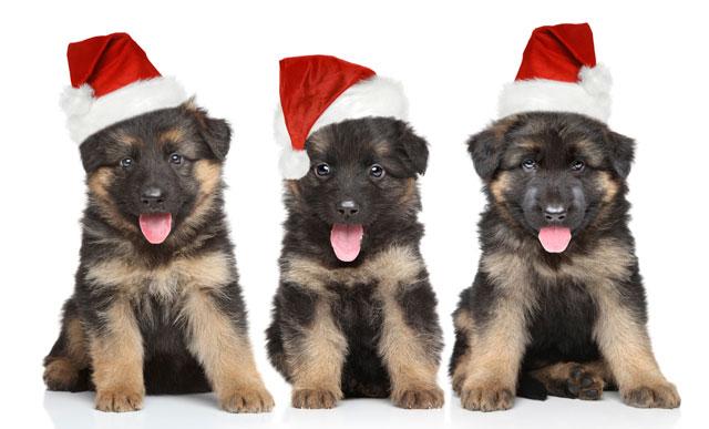 O médico veterinário das rações MAX, Marcello Machado, dá algumas dicas de como aproveitar o Natal e a virada do ano, ao lado do seu pet.