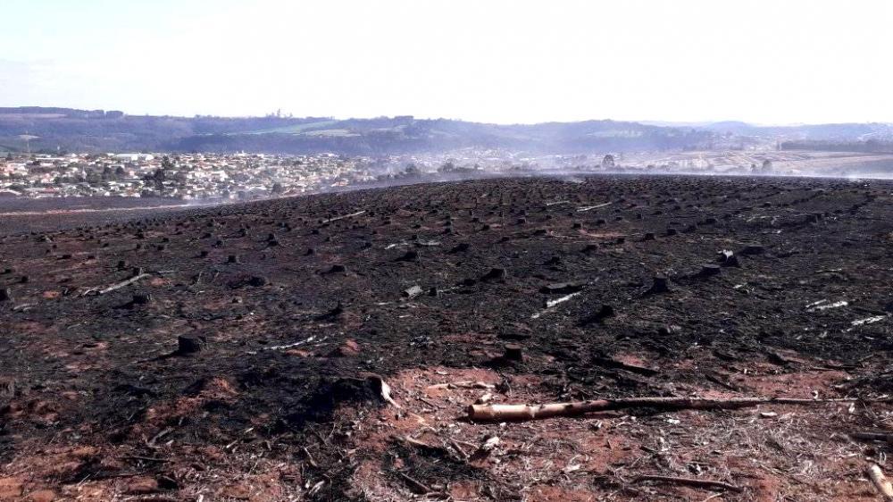 Área que continha floresta plantada devastada por incêndio em Jaguariaíva (PR), próximo a bairro residencial. Foto: Vitor C. M. Coelho.