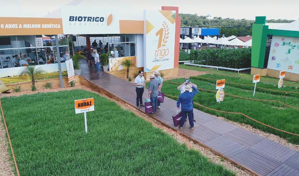 Durante o Show Rural 2020 público pode participar do concurso para a escolha do nome de uma nova linhagem que será lançada como cultivar TBIO nas próximas safras.