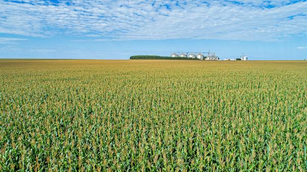 Milho: trajetória de ascensão com novas tecnologias empregadas no campo