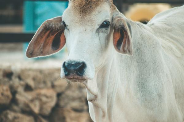 É recomendando notificar a Adapar em caso de animais com sinais neurológicos e fazer vacinação dos animais anualmente.