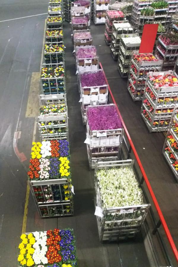 A agenda da Missão Comercial de Agrologística e Importação de Produtos Hortigranjeiros envolve também o interesse do país em ampliar o comércio de seus produtos, uma vez que a Holanda é referência na colheita e comercialização de frutas e legumes no conti