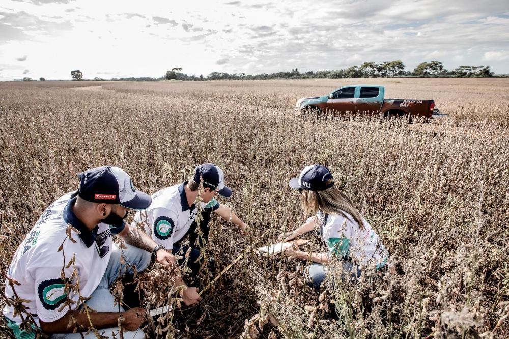 Após a avaliação de lavouras precoces pelas três primeiras equipes da expedição, a consultoria revisou o número para 126,3 milhões de toneladas do grão. A estimativa pré Rally era de 124,3 milhões de toneladas.