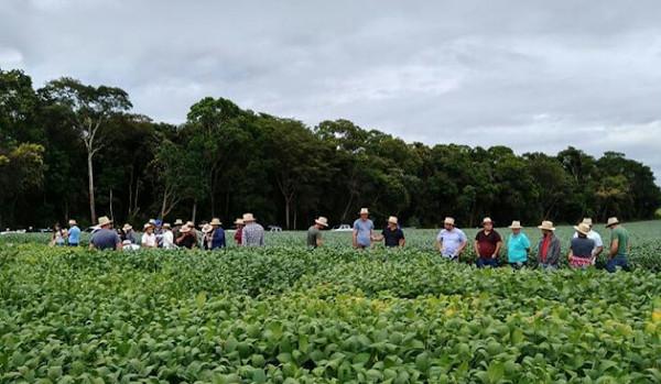Nos dias 3 e 4 de março, o Tec Campo acontece nos municípios de Taquarituba e Taquarivaí (São Paulo). No evento, cooperados das unidades terão acesso às palestras técnicas e poderão observar as cultivares da própria região.