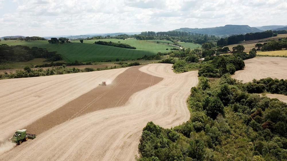 A expectativa de produção de soja, por exemplo, passou de 19,7 milhões de toneladas para 20,4 milhões, um incremento de produtividade de duas sacas a mais por hectare. Fotos Toninho Anhaia