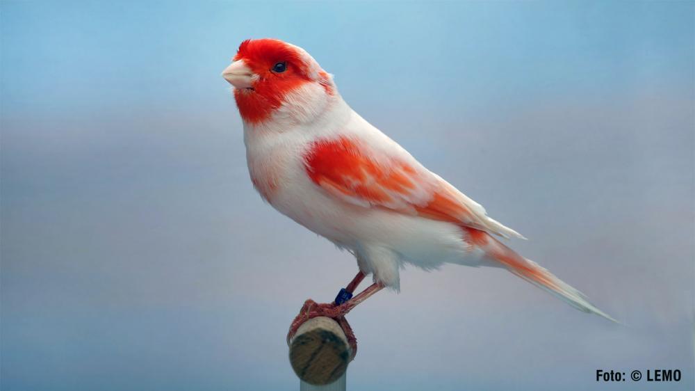 A higienização na criação de qualquer ave ou animal de estimação é primordial.