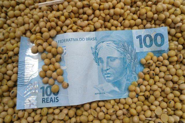 Nesta semana, os Indicadores de soja, milho e também o de arroz atingiram recordes nominais das respectivas séries do Cepea (Centro de Estudos Avançados em Economia Aplicada), da Esalq/USP.