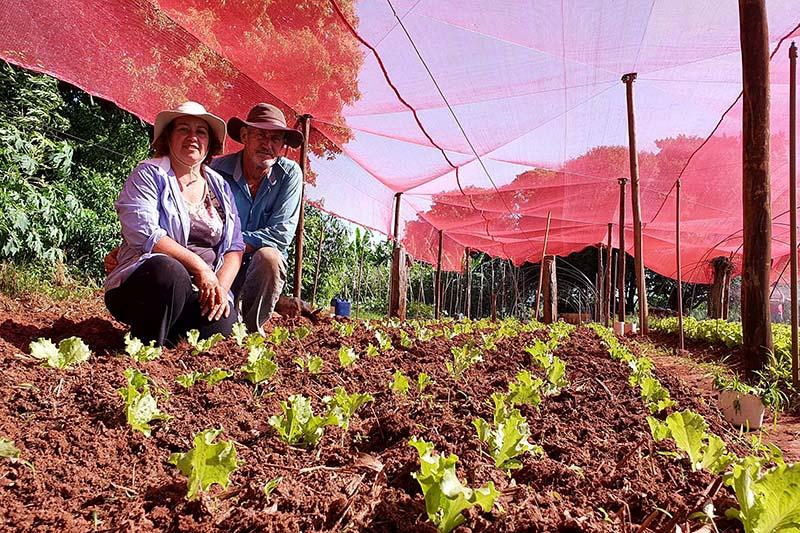 Até o ano passado, a produção de hortaliças na propriedade era sazonal, concentrada entre abril e setembro, quando a temperatura era mais amena. A irrigação era feita manualmente, exigindo quase três horas de trabalho todos os dias. Com a assistência técn