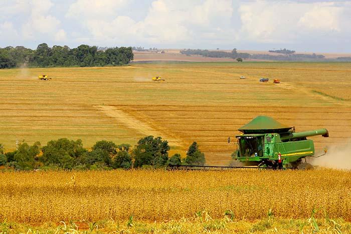 O relatório comprova uma safra de soja recorde no Estado, próxima a 20,7 milhões de toneladas. Também houve melhora na avaliação do milho de primeira safra.