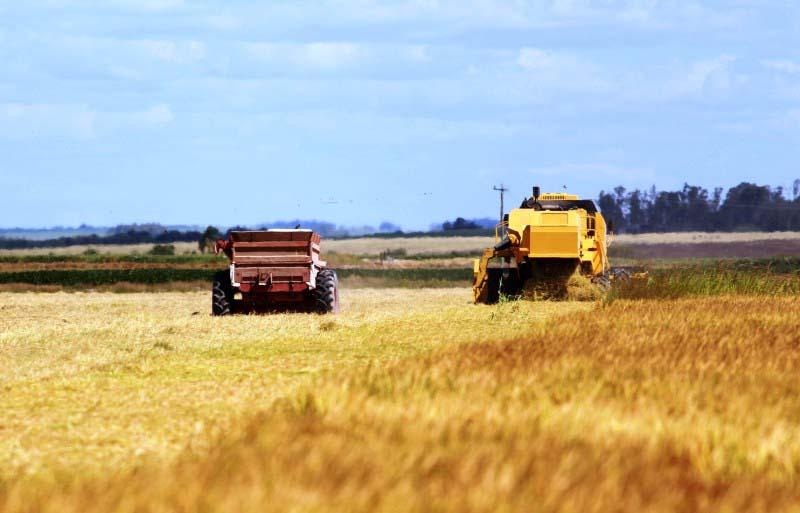 Trabalhos de colheita no Estado estão em fase final - Foto: Sérgio Pereira/Irga