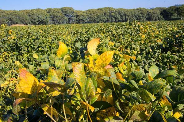 """""""Sem aumentar a produtividade não há como ser sustentável no agronegócio"""", afirmam pesquisadores do CESB"""