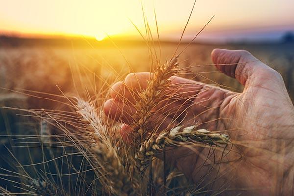 Os agricultores de hoje são constantemente desafiados por terem que produzir mais colheitas com menos recursos.