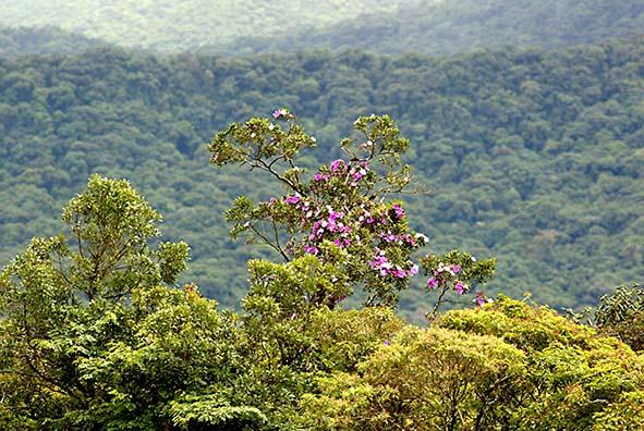 Lei da Mata Atlântica deve se sobrepor ao Código Florestal em ações relacionadas ao bioma, defende MPF