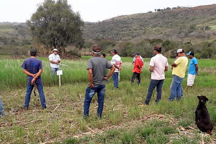 IDR-Paraná incentiva cultivo de pastagens de inverno